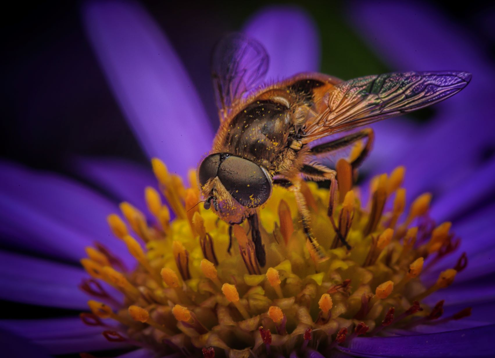 Read more about the article Beefly