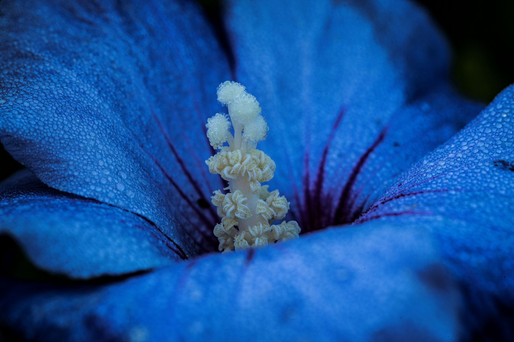 Read more about the article Blue Flower