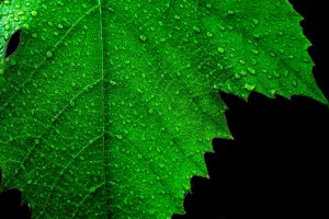 Read more about the article Leaf