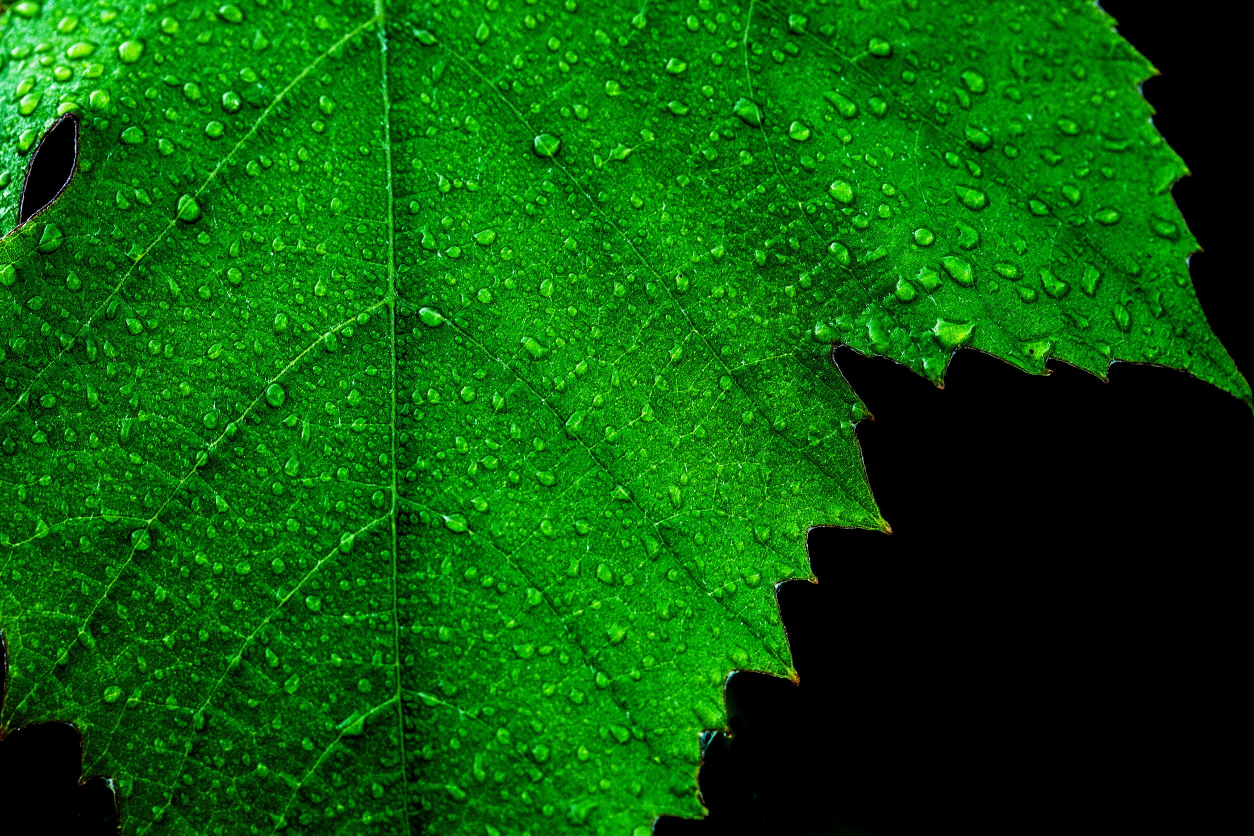You are currently viewing Leaf