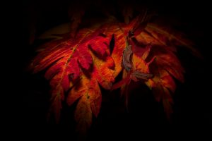 Read more about the article Autumn Leaves