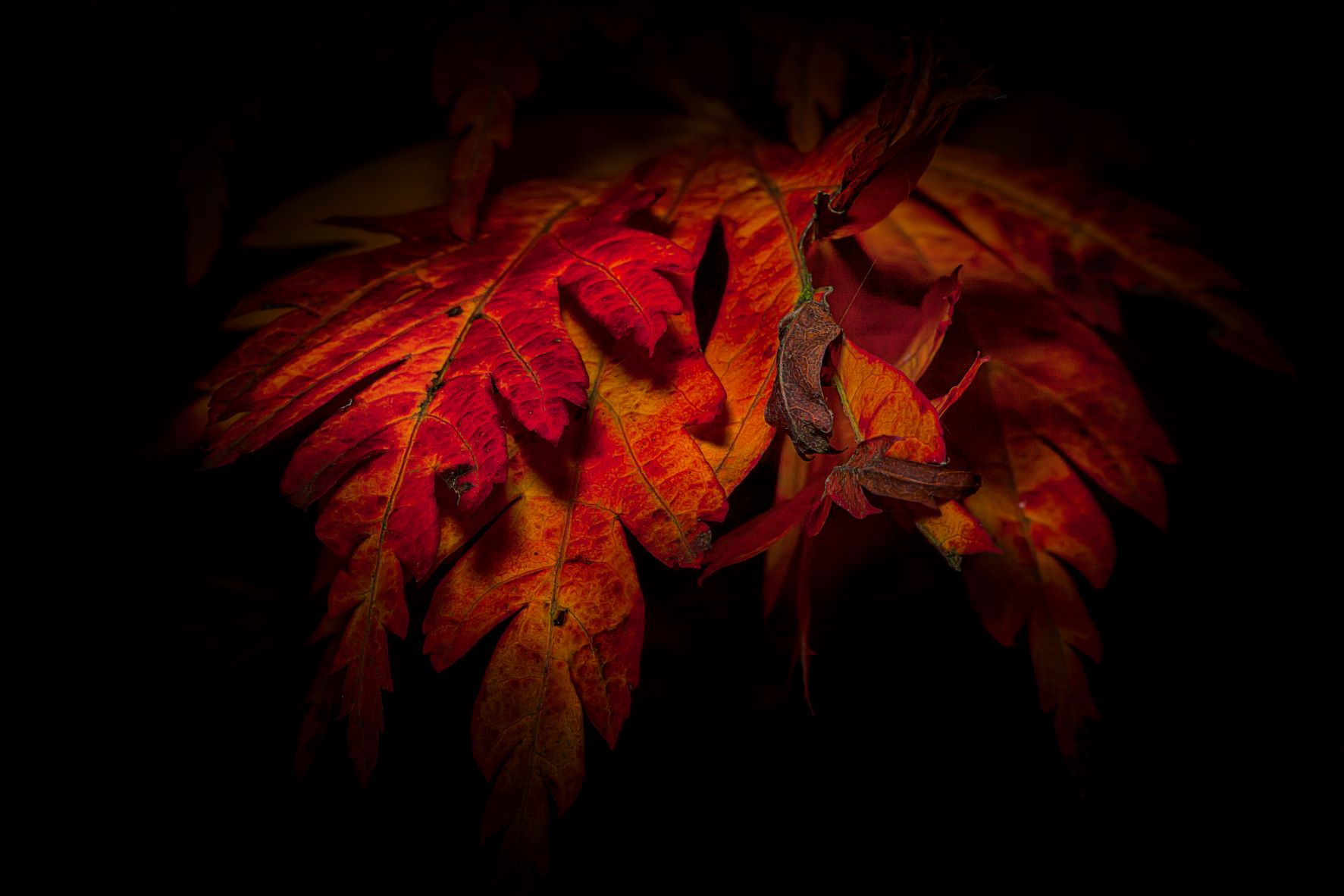 You are currently viewing Autumn Leaves