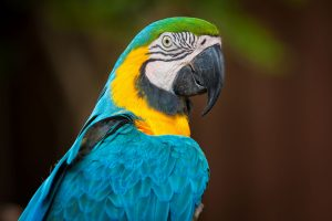 Read more about the article Parrot