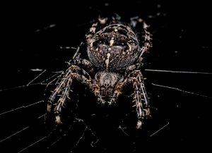 Read more about the article Spider