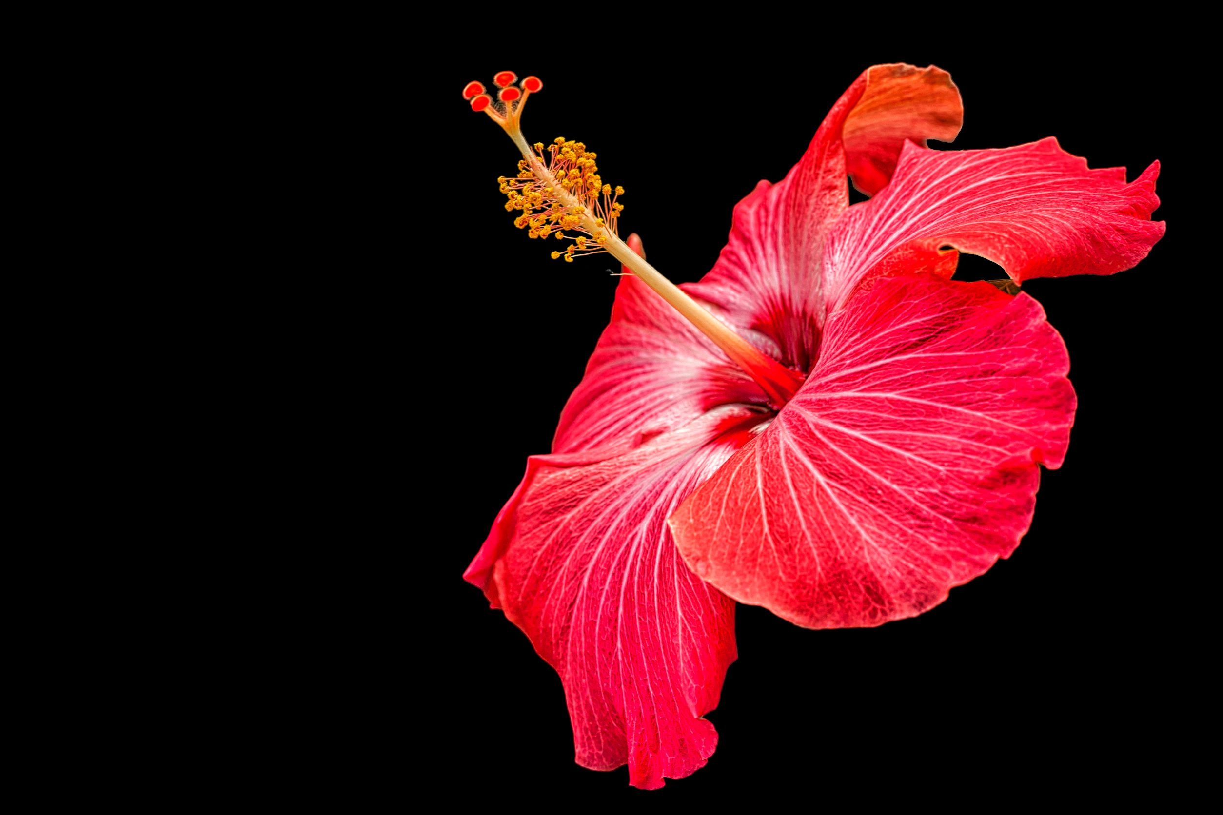 You are currently viewing Flower Red