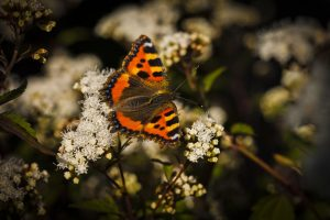 Read more about the article Butterfly