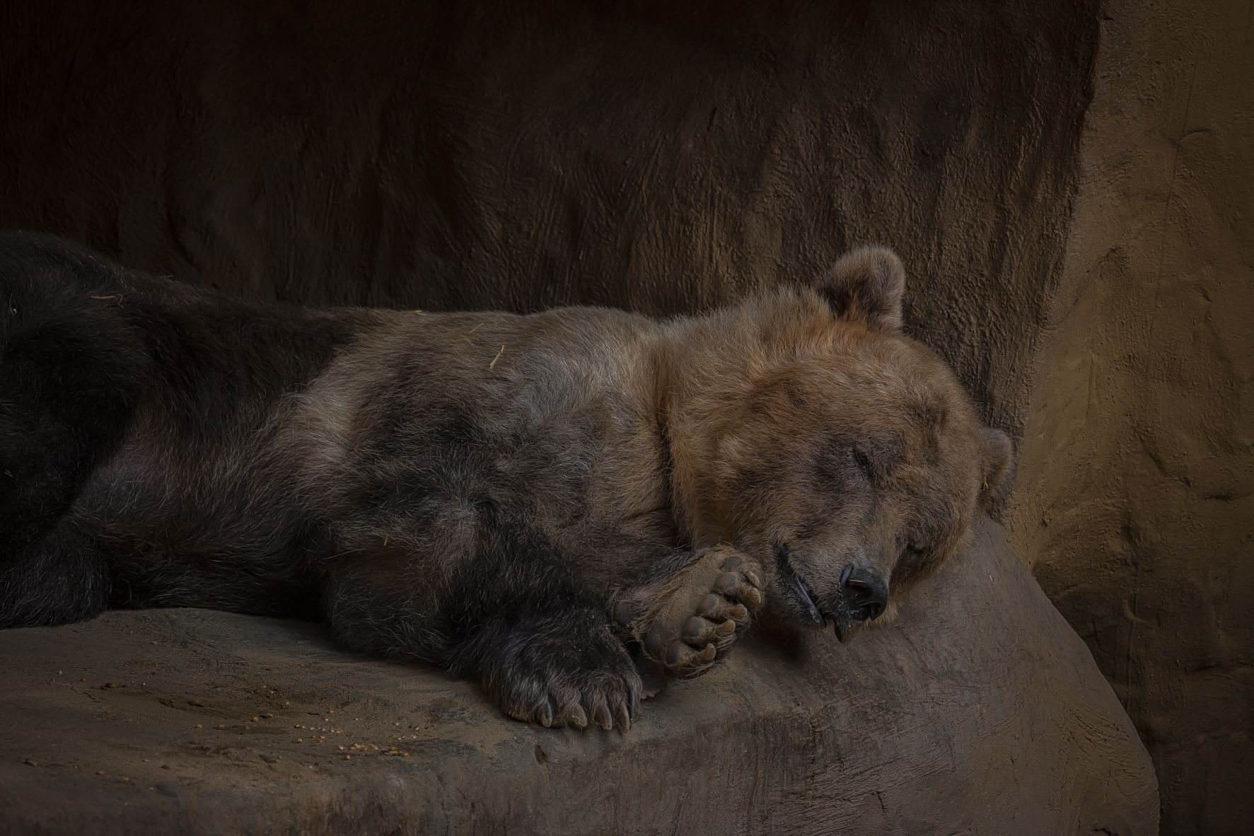 Read more about the article Sleeping Bear