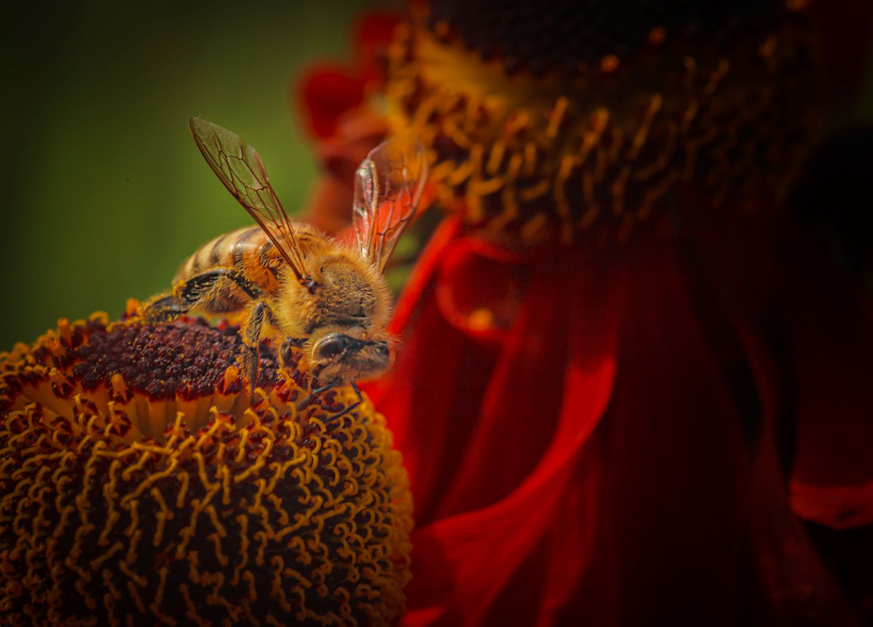 Read more about the article Bee