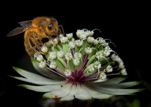 Read more about the article Bee Closeup